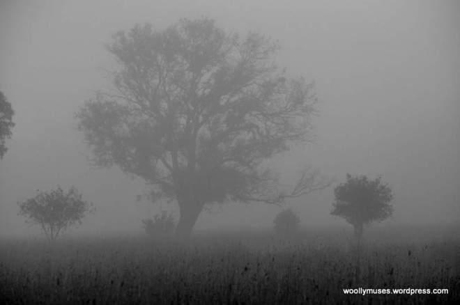 tree_0034