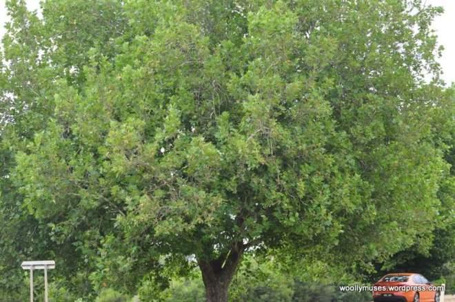 trees_0453