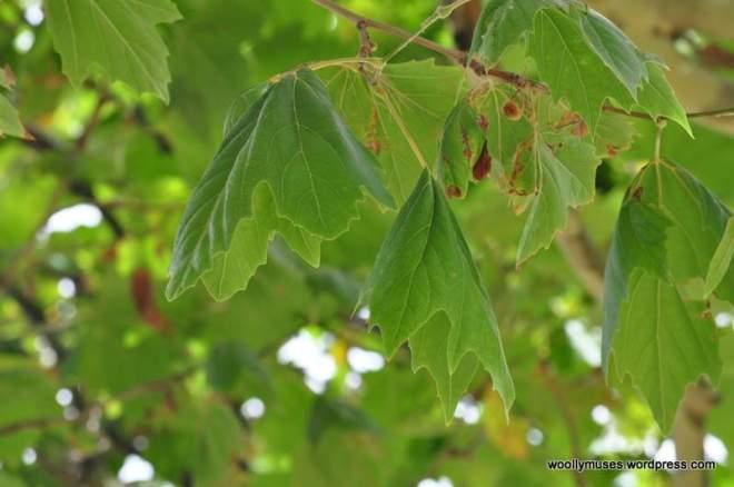 trees_0479