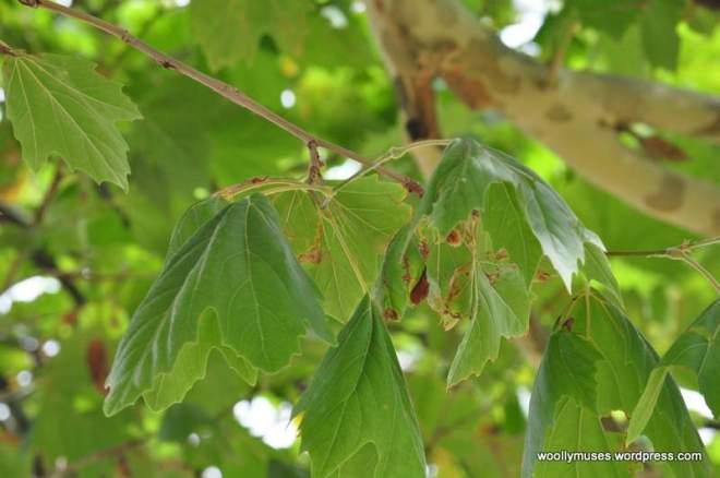 trees_0480