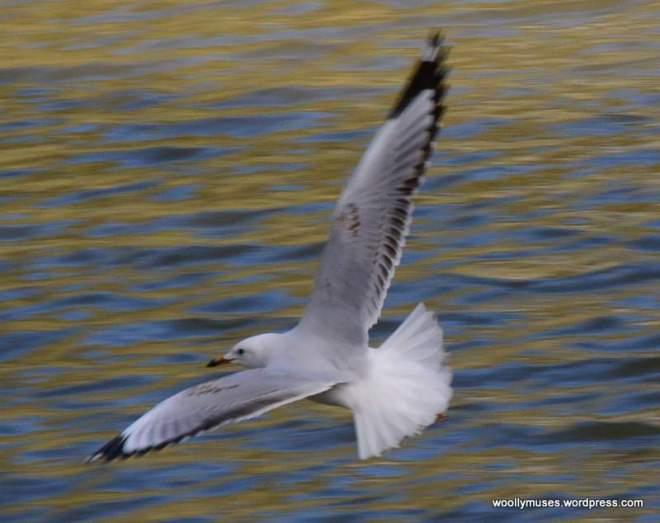 5-seagull_0123