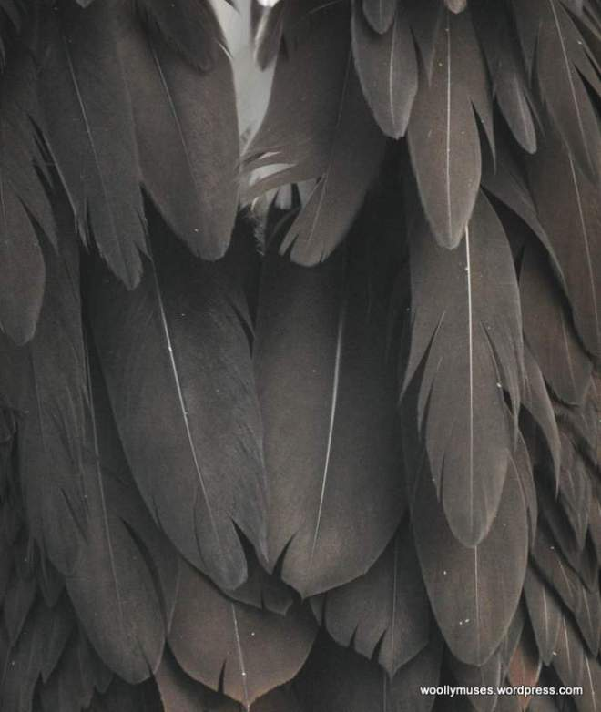 feather_0101