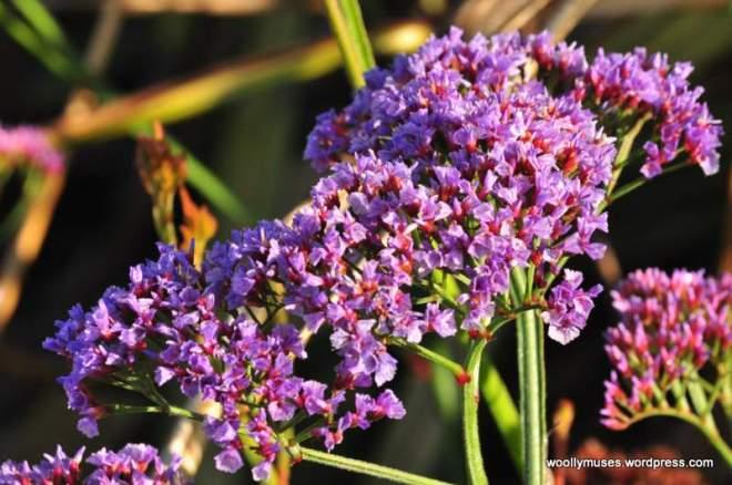 flower_0188