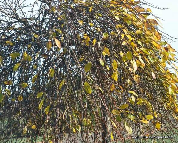 tree_0168
