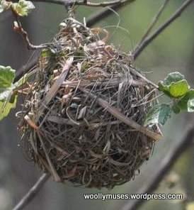 weaver_nest_0443A