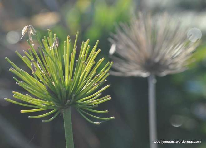 flower_0148