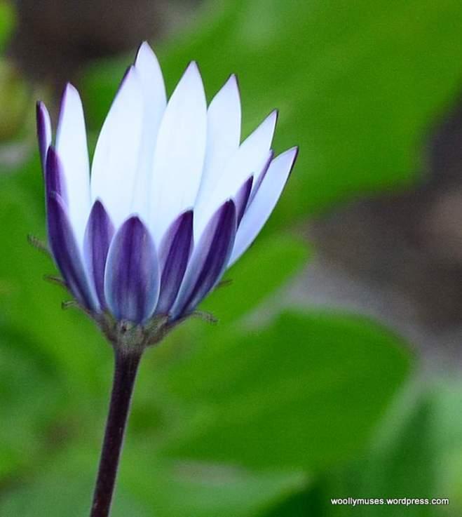 flower_0296