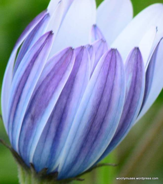 flower_0304