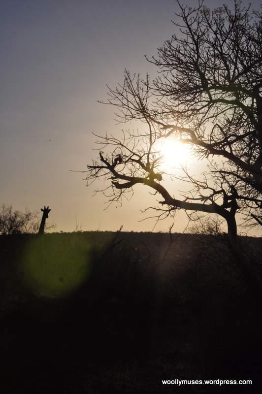sunset_0340