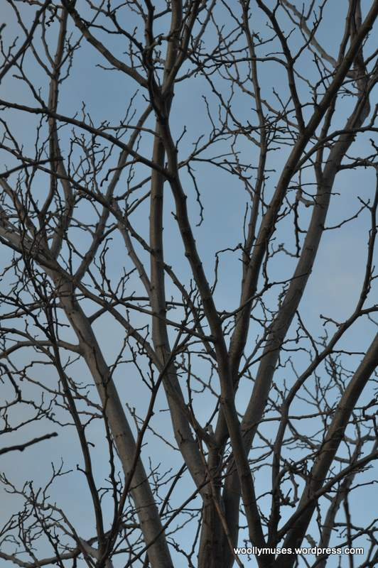 tree_0045