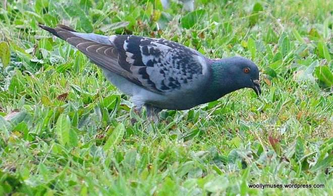 birds_0729