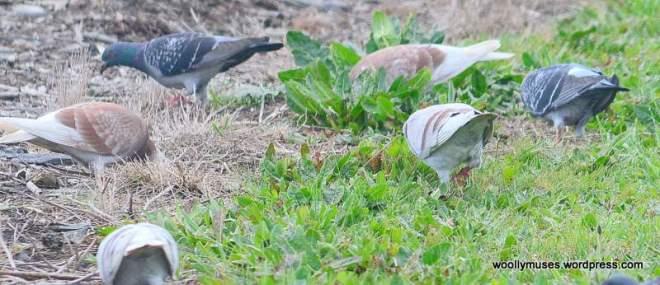 birds_0730