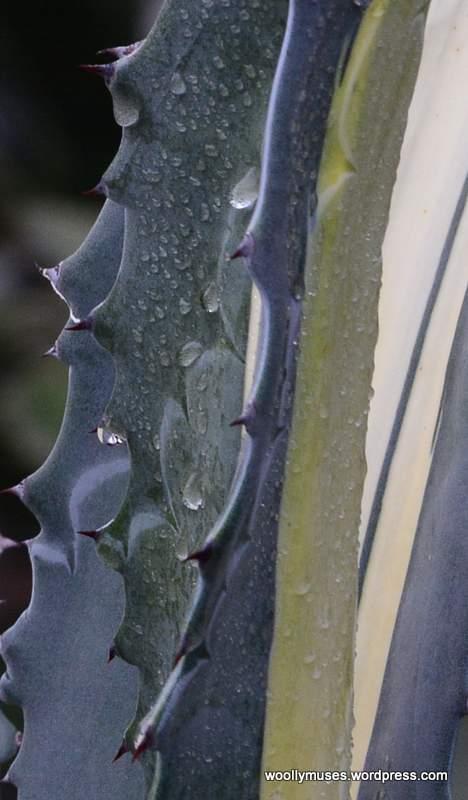 cactus_0705