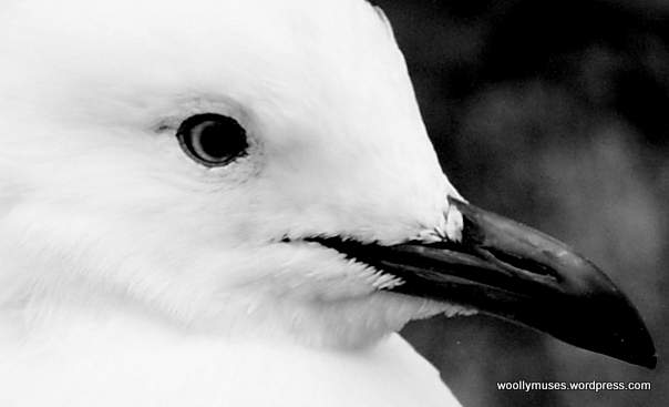 seagull_3426