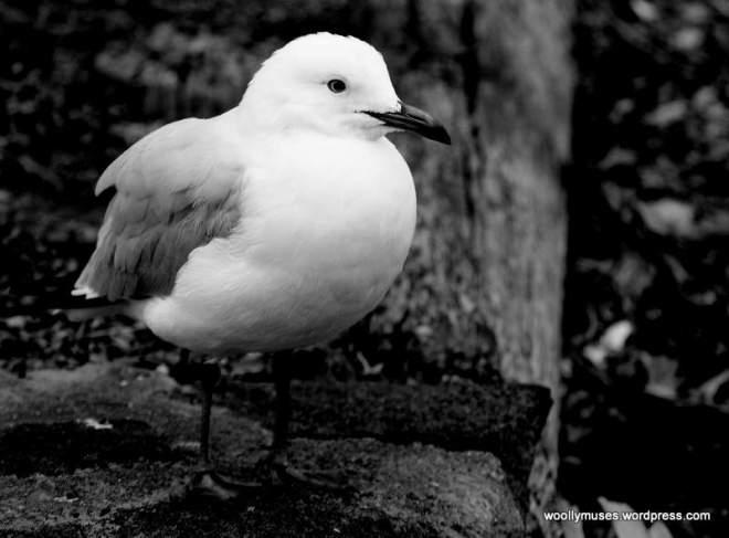 seagull_4426