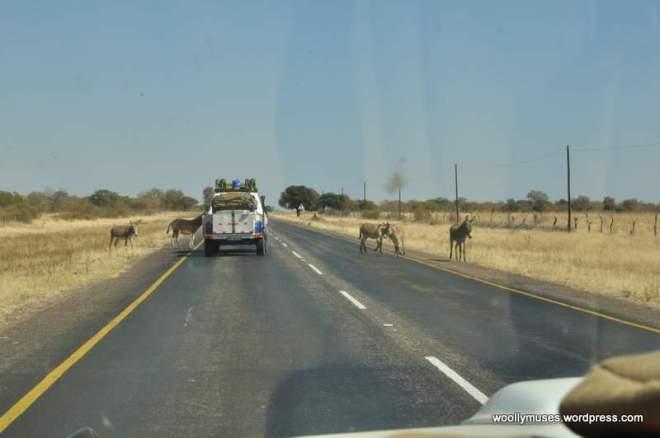 botswana_0215