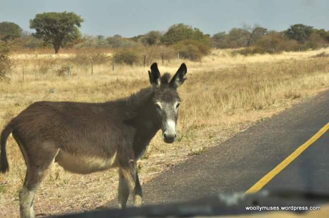 botswana_0216