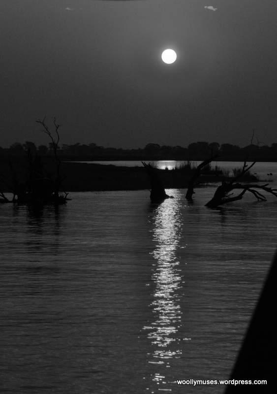 chobe sunset_0916BW
