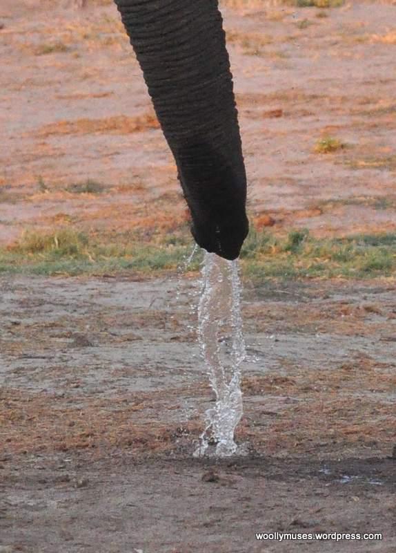 elephaant_0199