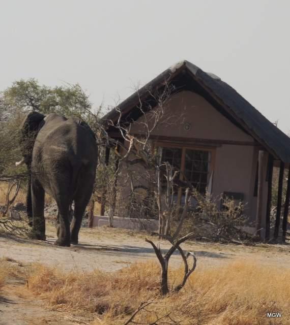 elephant-h-1