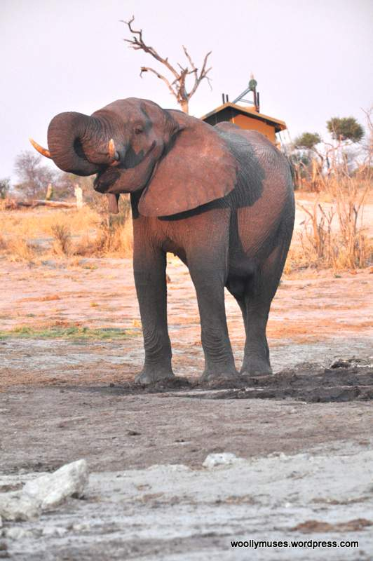 elephant_0193