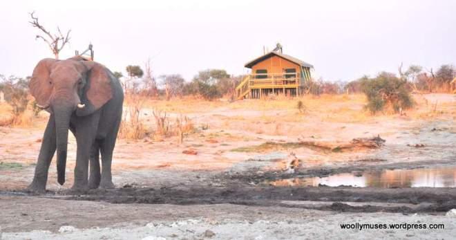 elephant_0263