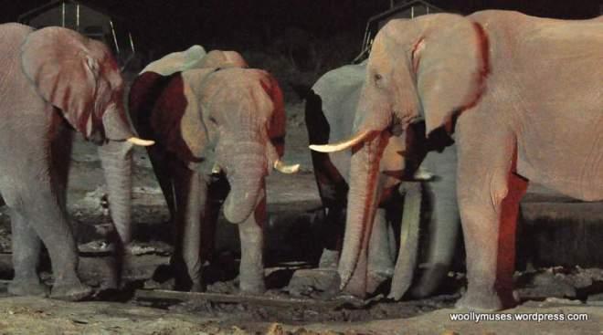 elephant_0294