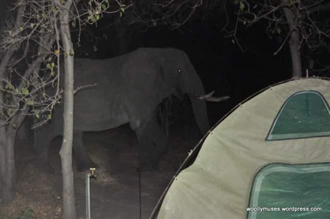 elephant_0568
