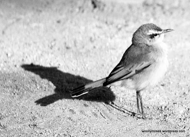 bird_0008