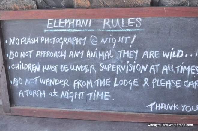 elephant_0048
