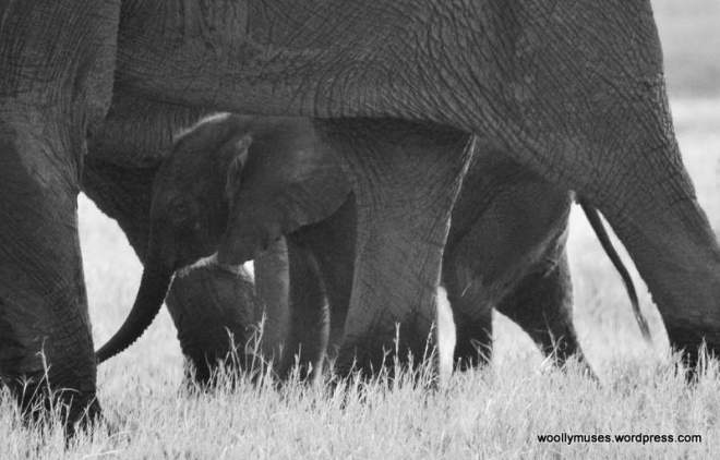 elephant_0865a