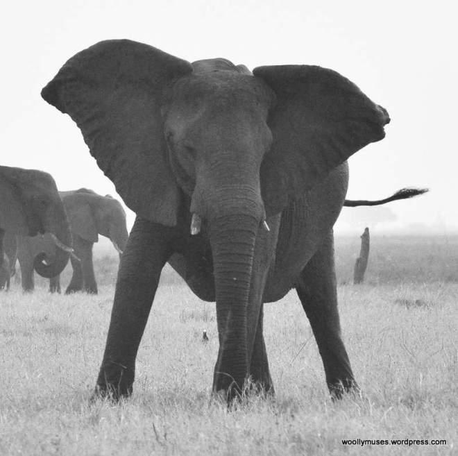 elephant_0922a