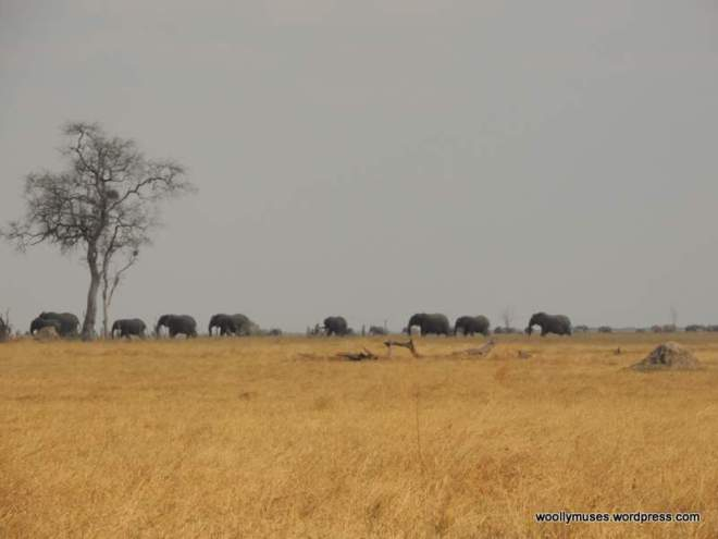 elephants-H_2239
