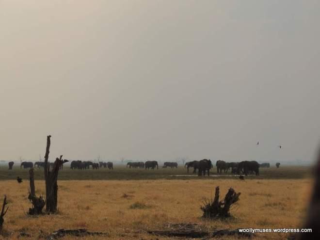 elephants-H_2253