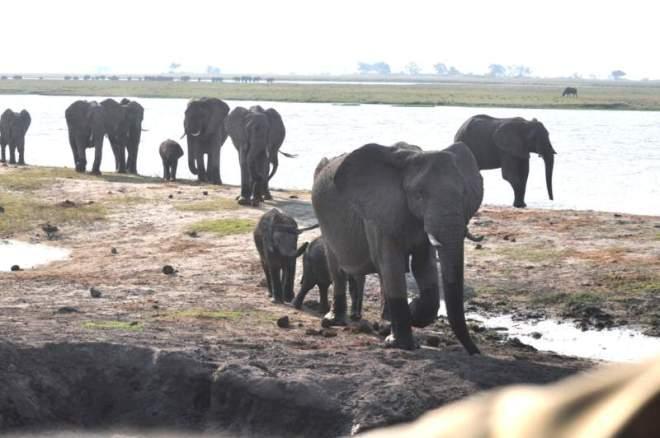 elephants_0061
