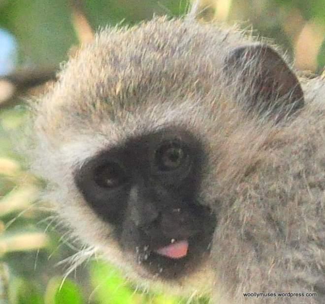 monkey_210
