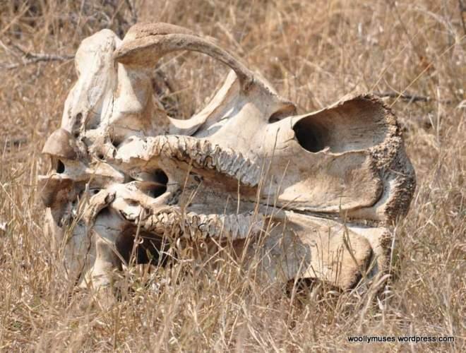 skeleton_0618