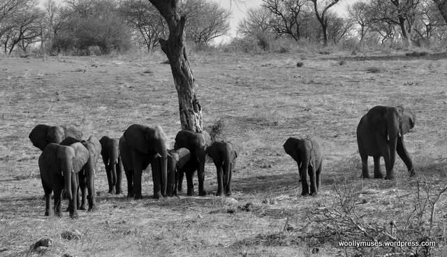 elephant_0405
