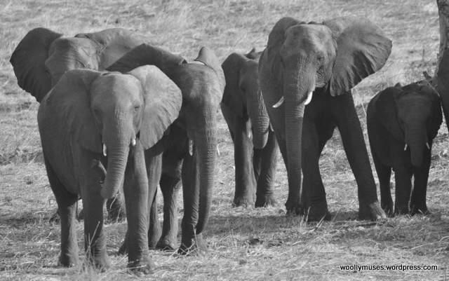 elephant_0410