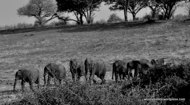 elephant_0422