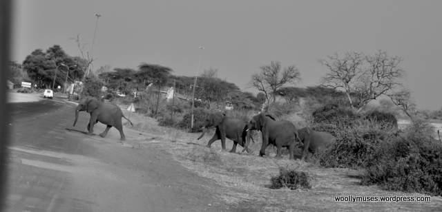 elephant_0428