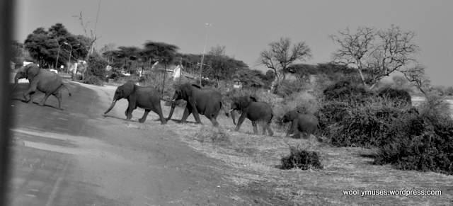 elephant_0435