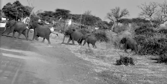 elephant_0438