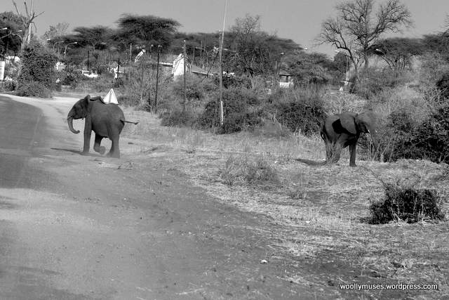 elephant_0449