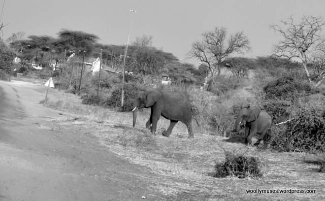 elephant_0451