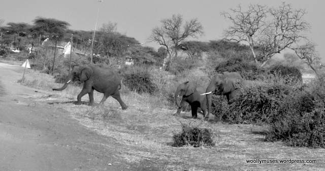 elephant_0454