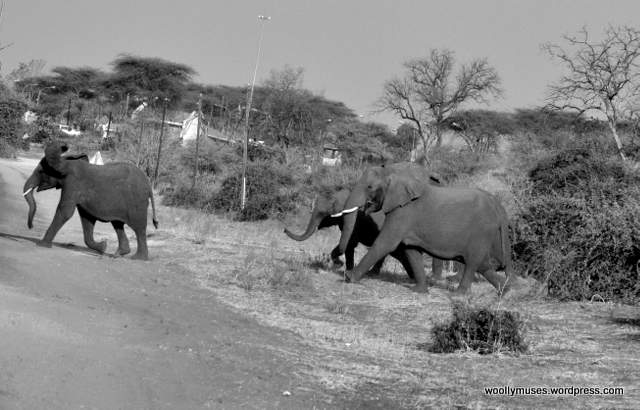 elephant_0456