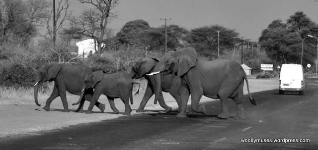 elephant_0461