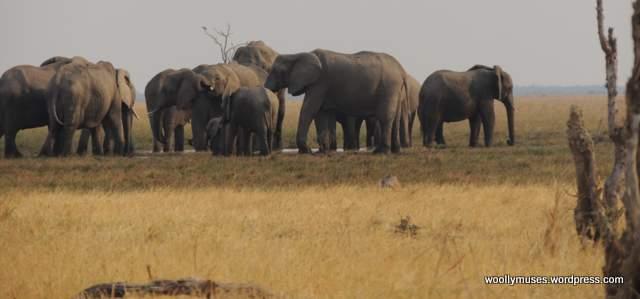 elephant_N2250