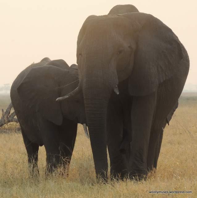 elephant_N2287